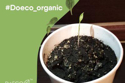 Упаковка из органических материалов и ее близость к природе